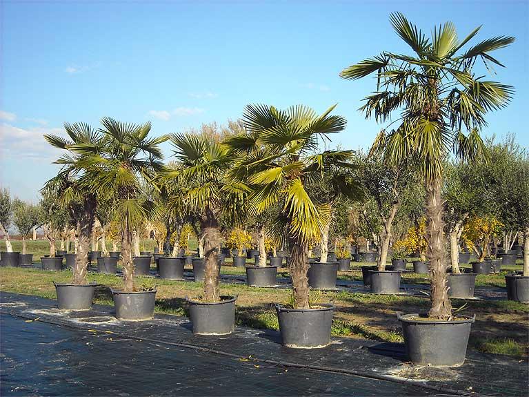 vivai mediplants a camposanto di modena offre una vasta