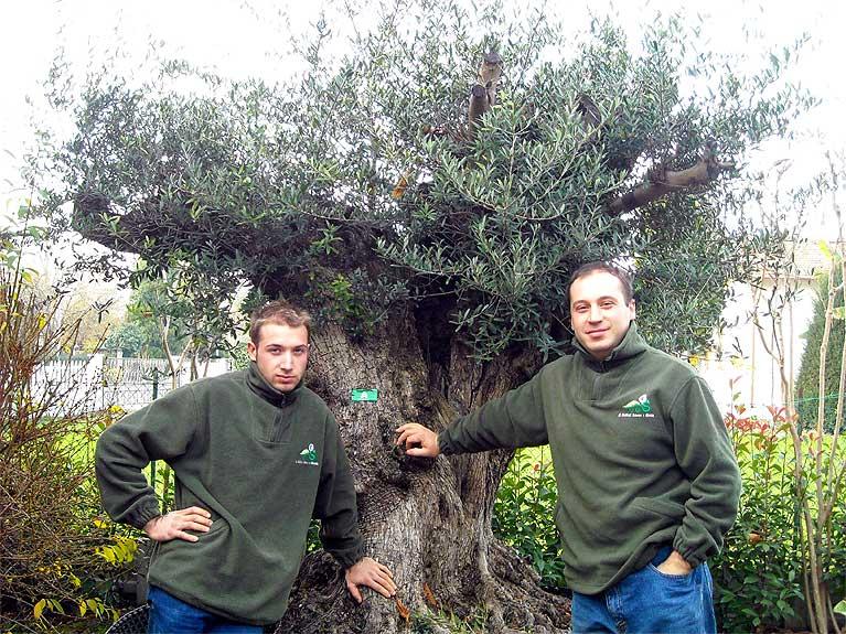Vivai mediplants a camposanto di modena offre una vasta - Sughero pianta da giardino ...